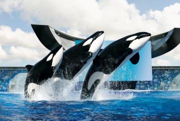 观赏企鹅,海狮,海豚等海洋动物为您呈献不可思议的精彩表演,同时重逾